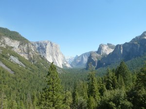 Trees and mountains in Yosemite